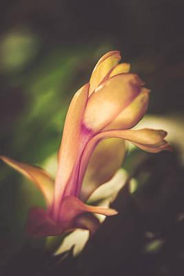 Flowering Cactus Poster by Cindy Grundsten