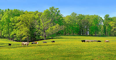 Flowering Cow Pasture Poster