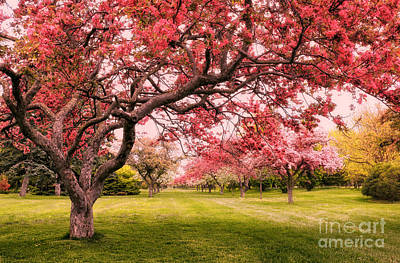 Flowering Crabapple Trees Poster by Charline Xia