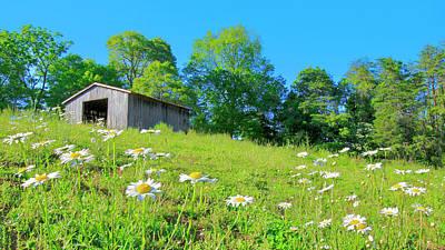 Flowering Hillside Meadow - View 2 Poster