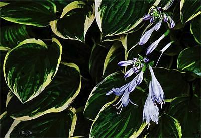 Flowering Hosta Poster