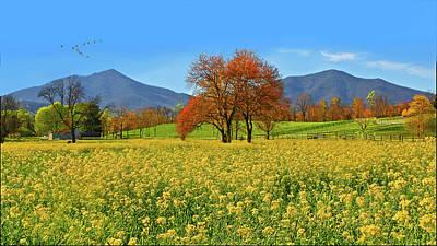 Flowering Meadow, Peaks Of Otter,  Virginia. Poster