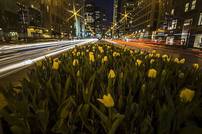Flowers At Night On Chicago's Mag Mile Poster