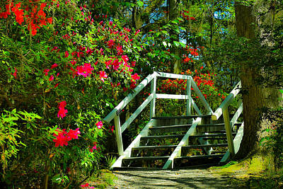 Flowers Bloom Alongside Magnolia Plantation Bridge - Charleston Sc Poster