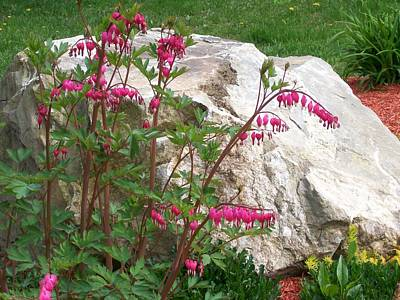 Poster featuring the digital art Flowers On The Rocks by Barbara S Nickerson