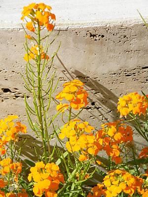 Flowers Orange Poster