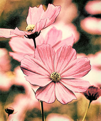 Flowers - Retro Cosmos Poster by HH Photography of Florida