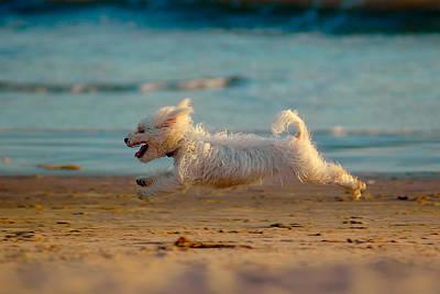 Flying Dog Poster