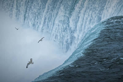 Flying Gulls At Niagara Horseshoe Falls Poster by Randall Nyhof