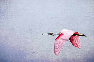 Flying Pretty - Roseate Spoonbill Poster by Debra Martz