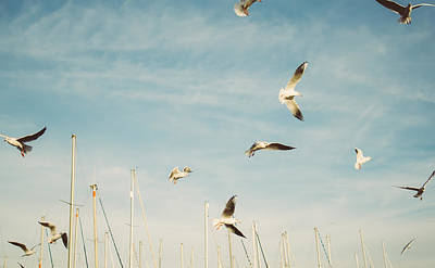 Flying Seagulls Poster by Pati Photography