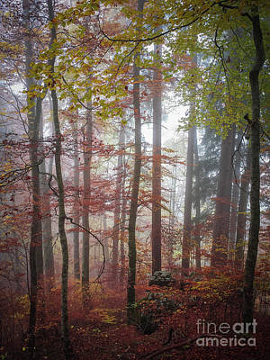 Fog In Autumn Forest Poster by Elena Elisseeva