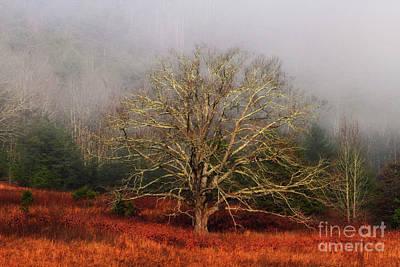 Fog Tree Poster