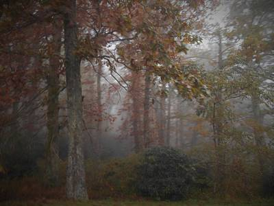 Foggy Autumn Morning Poster by Diannah Lynch