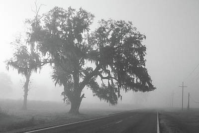 Foggy Louisiana Highway 308 Poster