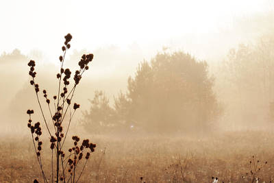 Poster featuring the photograph Foggy Meadow 2 by Scott Hovind