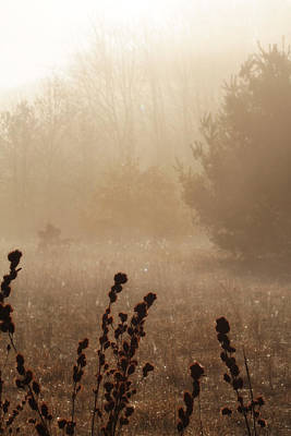 Poster featuring the photograph Foggy Meadow by Scott Hovind