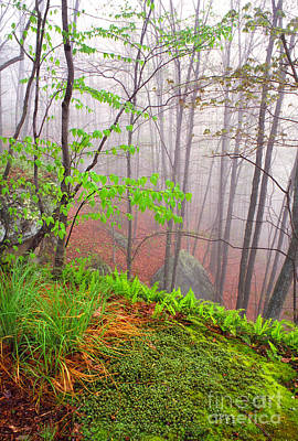 Foggy Misty Spring Morning Poster