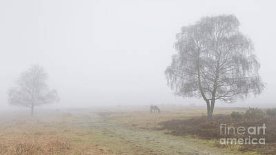Foggy Morning On Broomy Plain Poster by Richard Thomas