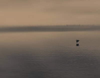 Poster featuring the photograph Foggy Pelican by Ron Dubin