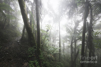 Foggy Rainforest Hike 1 Poster by Ernesto Ruiz