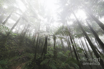 Foggy Rainforest Hike 2 Poster by Ernesto Ruiz