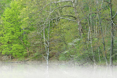 Foggy Spring Shoreline Hall Lake Poster by Dean Pennala