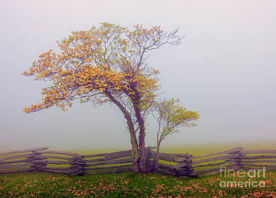 Foggy Tree And Fence In The Blue Ridge Poster
