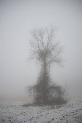 Poster featuring the photograph Foggy Walnut by Wanda Krack
