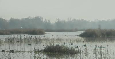 Foggy Wetlands Poster