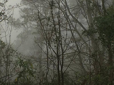 Foggy Woods Photo  Poster by Gina O'Brien