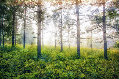 Foggy Woods - Wisconsin  Poster by Jennifer Rondinelli Reilly - Fine Art Photography