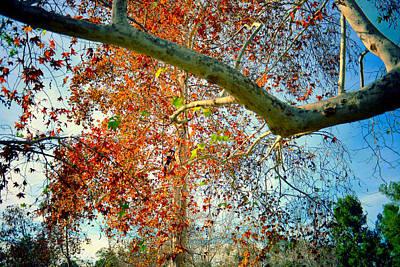 Foliage Poster by Adrian Vajiac