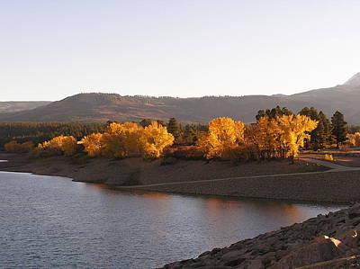 Foliage At Jackson Lake Poster