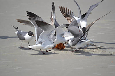 Food Fight - Gulls At The Beach Poster