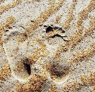 Foot Prints  -  Part 2 Of 3 Poster
