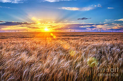 For Amber Waves Of Grain Poster by Jean Hutchison
