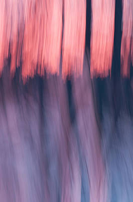 Forest Abstract Poster