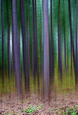 Forest Abstract02 Poster by Svetlana Sewell