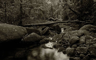 Poster featuring the photograph Atlantic Forest by Amarildo Correa