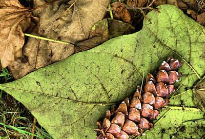 Forest Floor Still Life Poster
