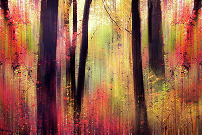 Poster featuring the photograph Forest Frolic by Jessica Jenney