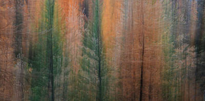 Forest Illusion- Autumn Born Poster