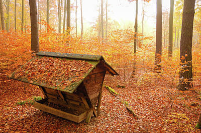 Forest In Autumn With Feed Rack Poster