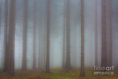 Forest In The Fog Poster by Michal Boubin