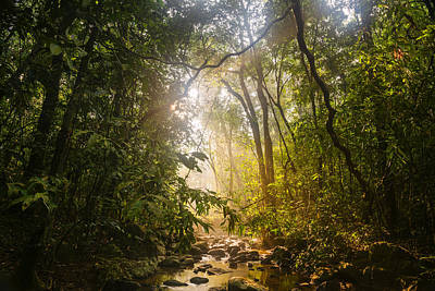 Forest Light At Western Ghats In Karnataka In India Poster