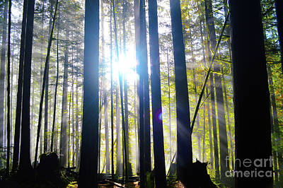 Forest Light Rays Poster