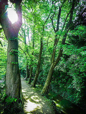 Poster featuring the photograph Forest Path by Bee-Bee Deigner