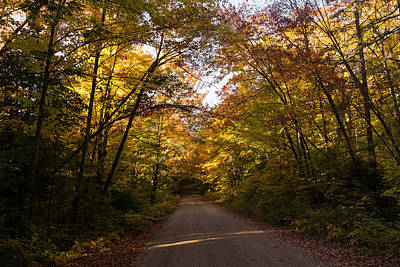 Forest Road - A Joy Ride Into Autumn Poster