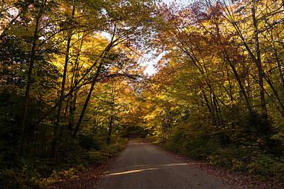 Forest Road - A Joy Ride Into Autumn Poster by Georgia Mizuleva